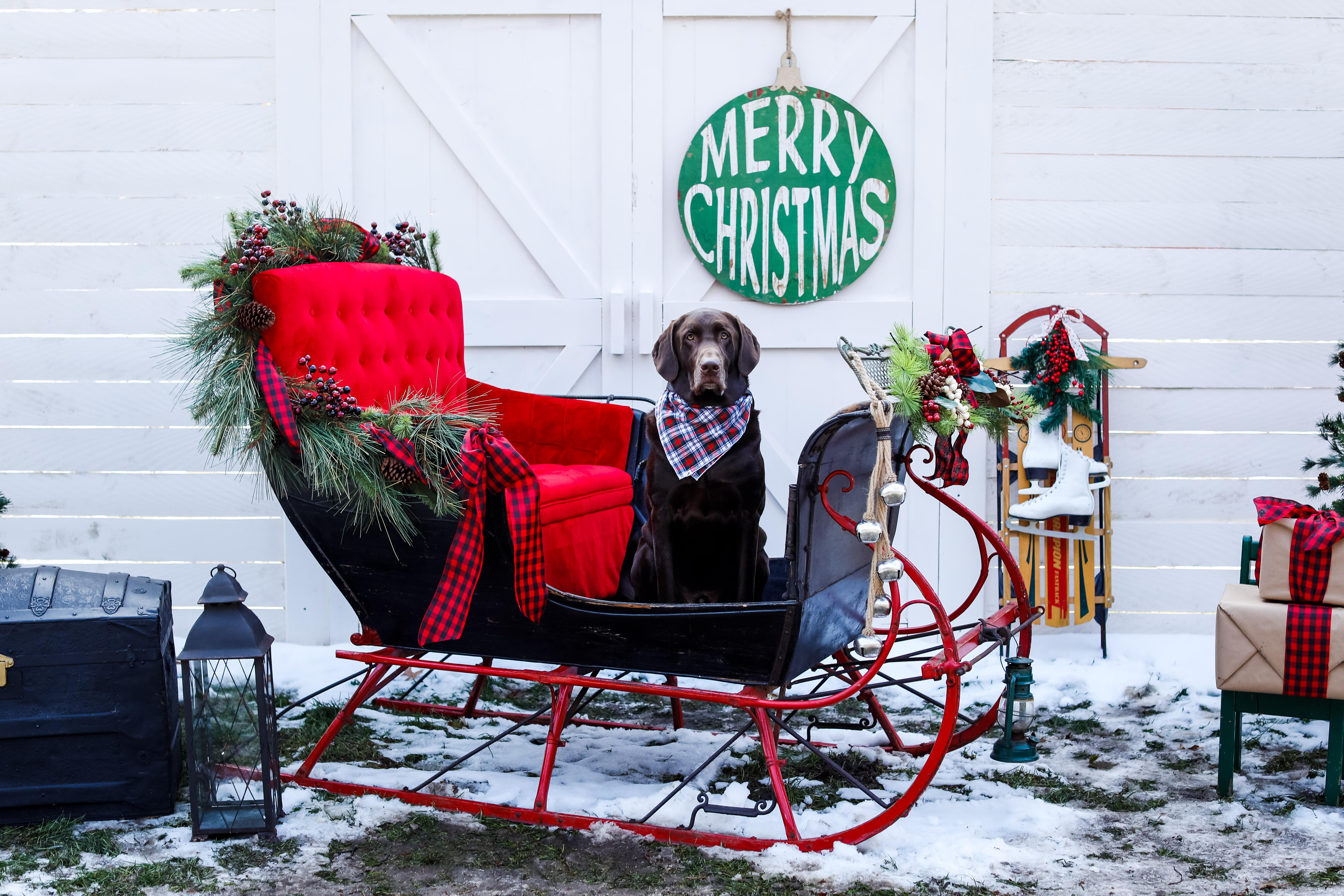 Becci Hethcoat Photography-Holiday Photographer-Wheaton--12